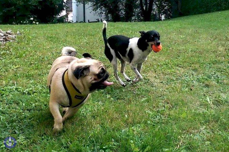 Touille is also making friends in Switzerland - dog friends.