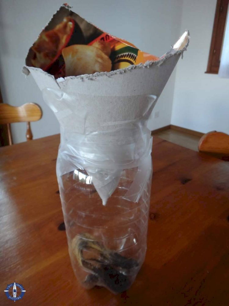 Homemade fruit fly trap at our house in Switzerland