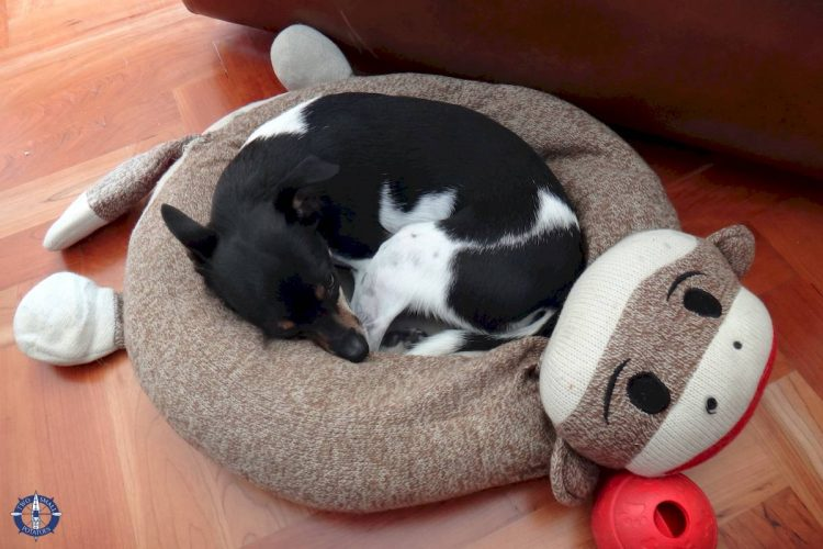 Our dog doesn't care about the cost of shipping her monkey bed from Oregon to Switzerland