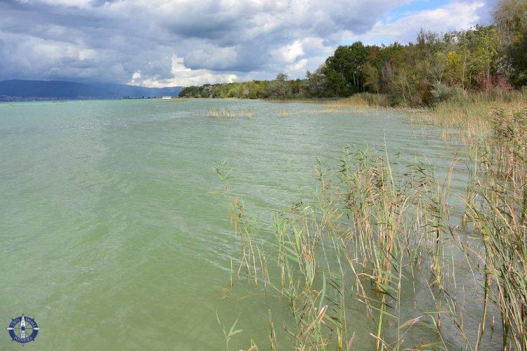 The Grande Caricaie wetlands on Lake Neuchatel, Switzerland