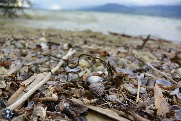 Shells on a beach at Lake Neuchatel in Switzerland