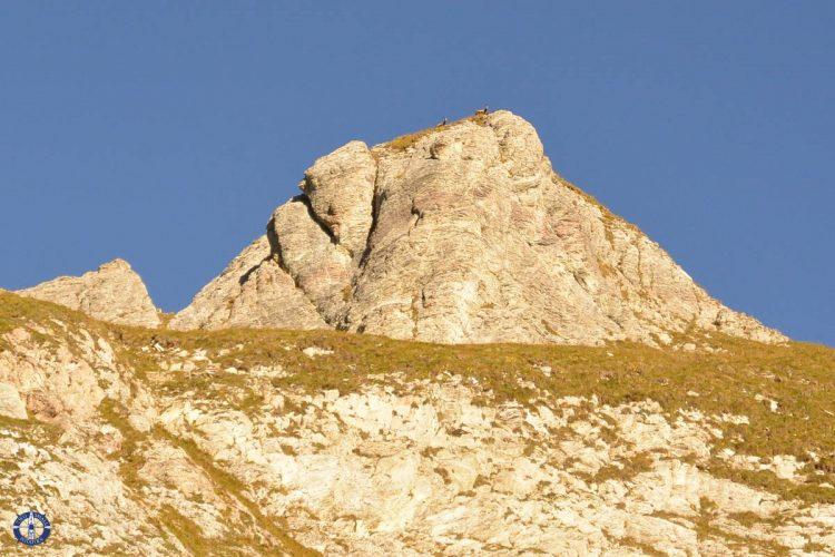 Alpine chamois watching us near Schafberg Peak in Switzerland