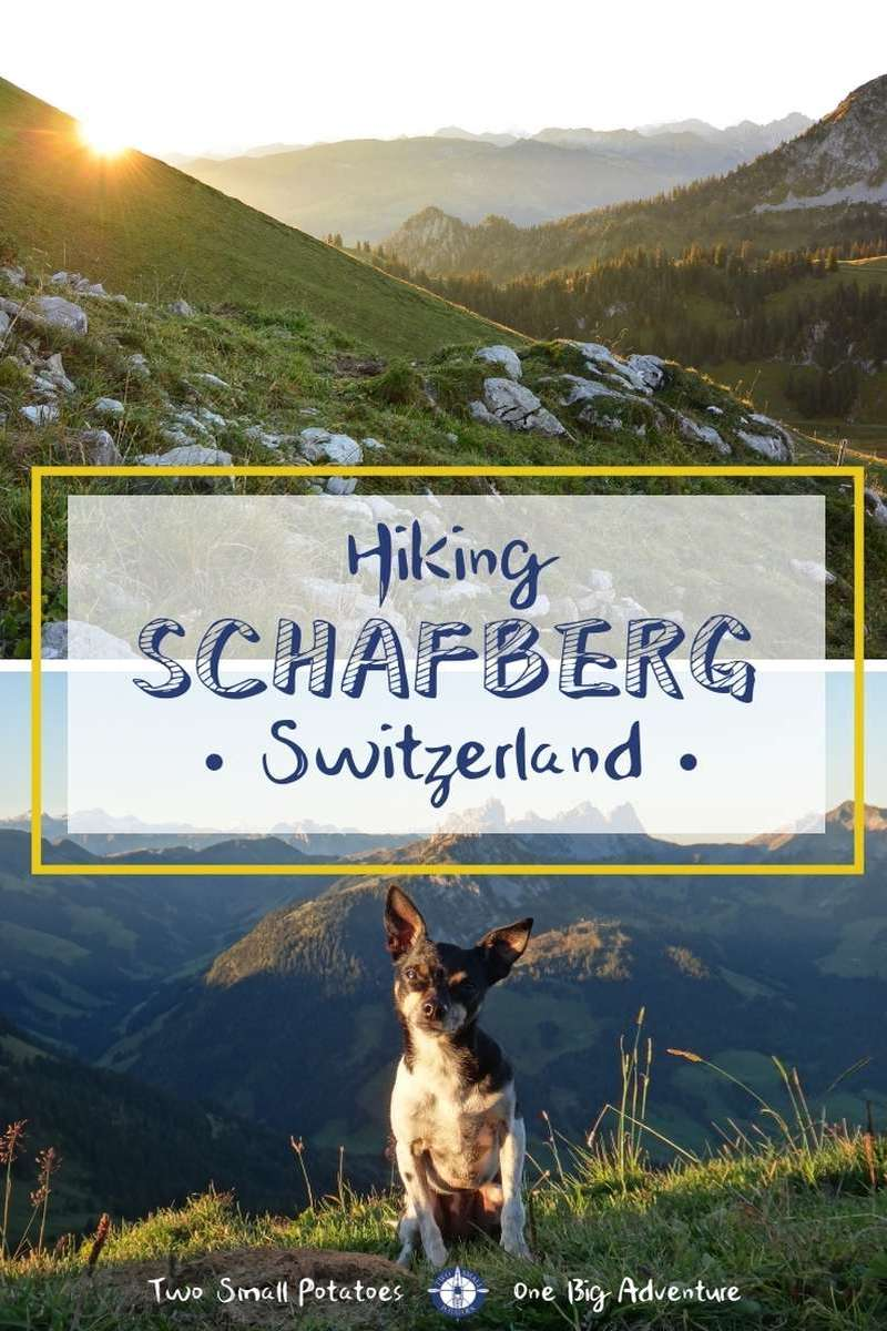 Hiking Schafberg peak in Switzerland promises panoramic views of the Alps. Make sure to bring your dog along too for a day in the mountains.