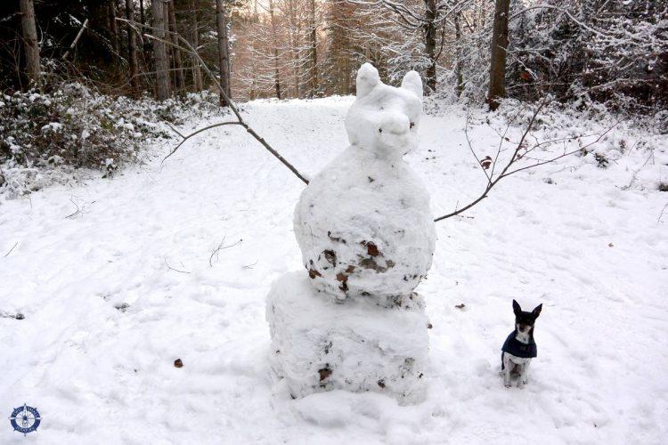 Building a snow fox in Switzerland