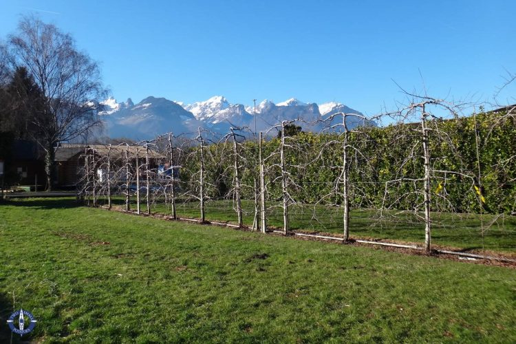 Alps in village of Aigle while car shopping in Switzerland