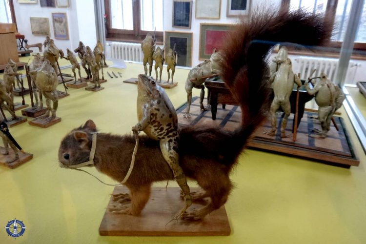 Frog riding a squirrel at the dead frog museum in Swtizerland