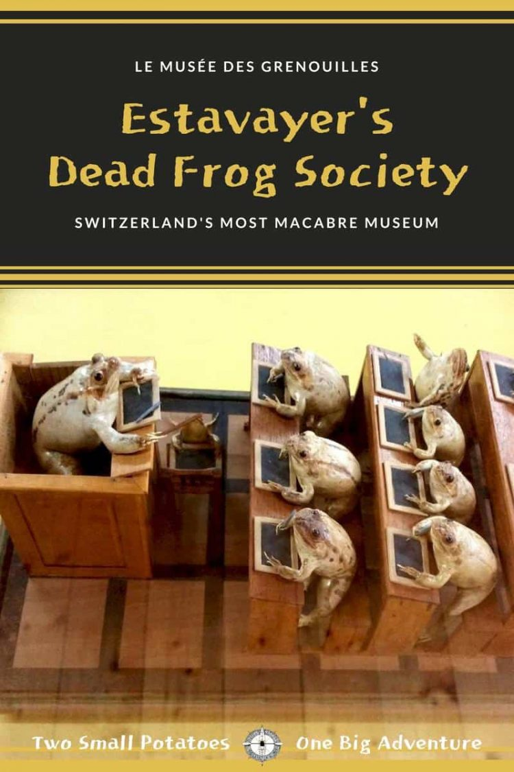 PIN, Dead frog museum blog by Two Small Potatoes Travel