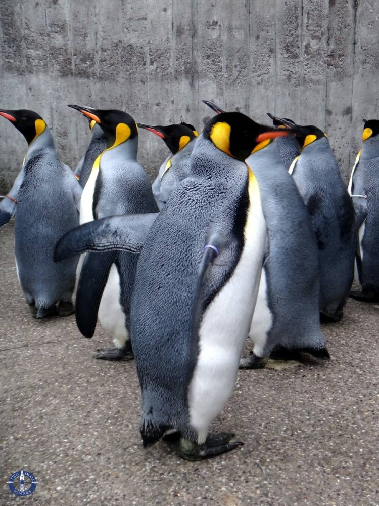 Penguin Parade at the Basel Zoo in Switzerland