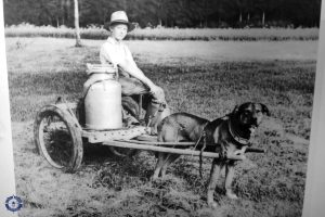 Swiss child riding a cart pulled by a dog to haul milk in Switzerland