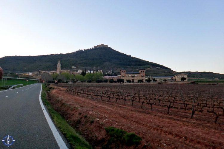 Wine growing region of Navarre in Spain