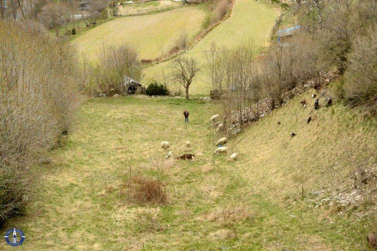 Sheep in Andorra la Vella on our road trip