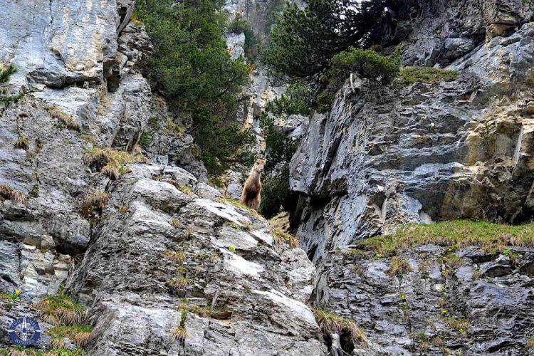 Alpine ibex near Lake Oeschinen, Switzerland