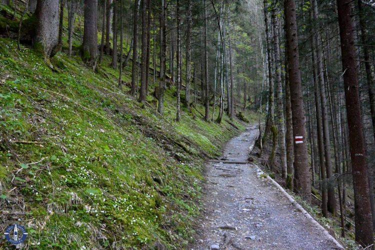 Trail through the woods alone Sefine Luetschine, hiking in Switzerland