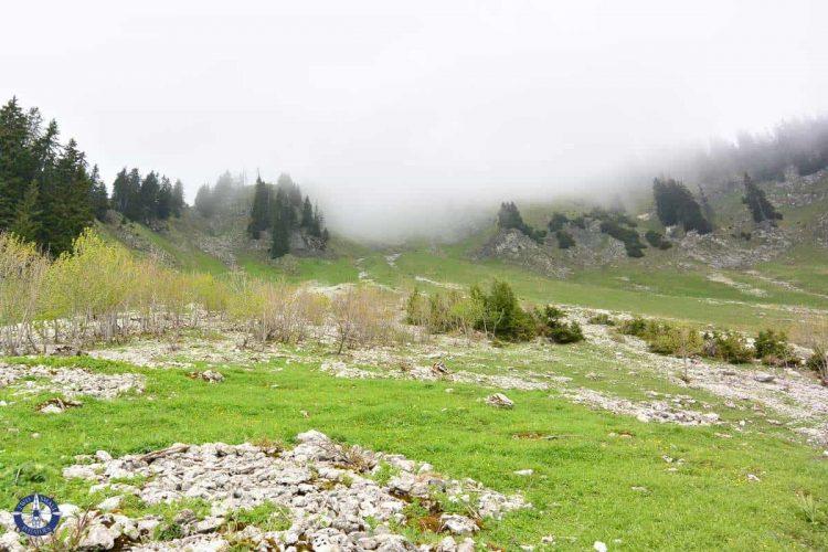 Chamois in the fog in Brecca Gorge, Switzerland
