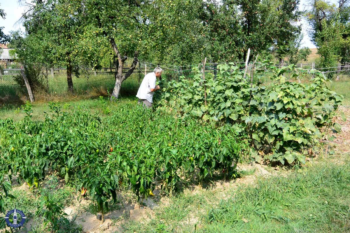 A local inspects his garden in Cartisoara, Romania