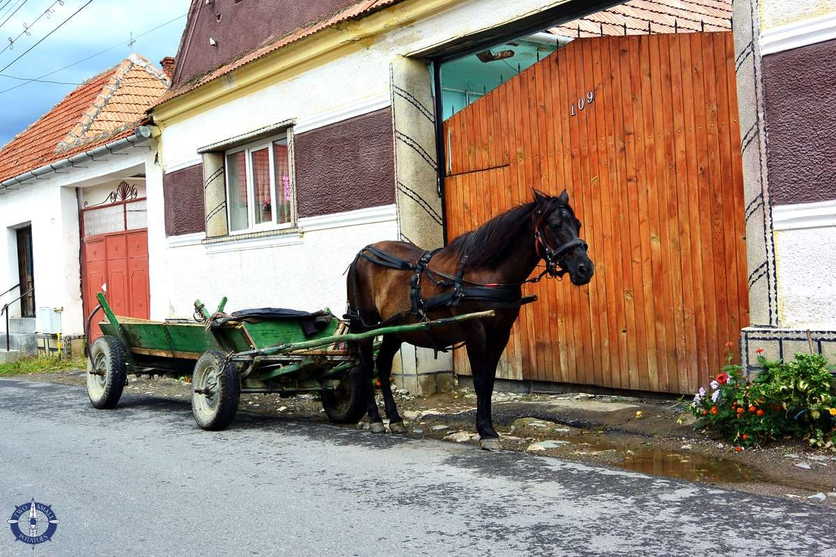 Horse at cart near Bran Castle in Romania