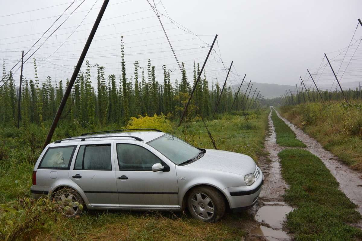 Camping in a hops field near Danes, Romania