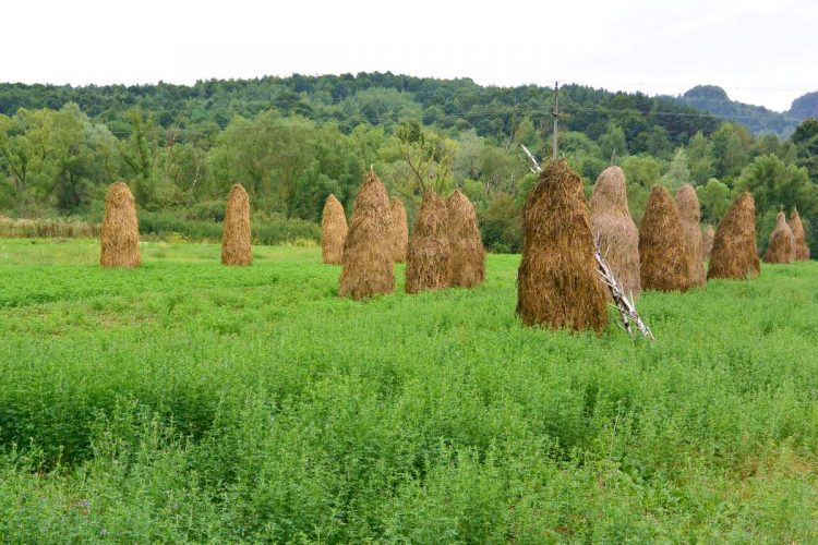 Haystacks near Surdesti, Romania