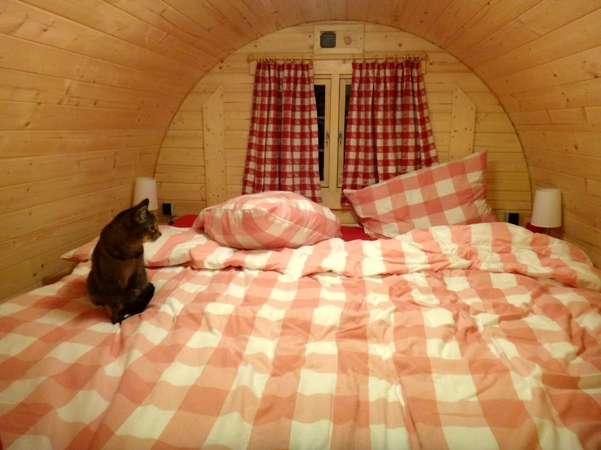 Tica the cat in our sleep barrel, Germany