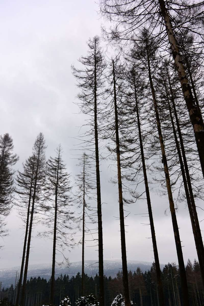 Beautiful trees in Harz National Park, Germany