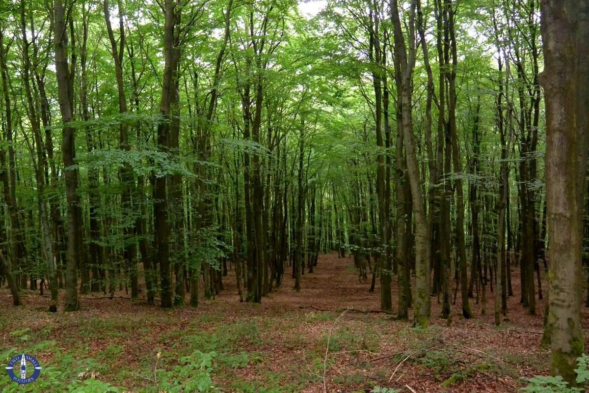 Beech forests in Kellerwald-Edersee National Park, Germany