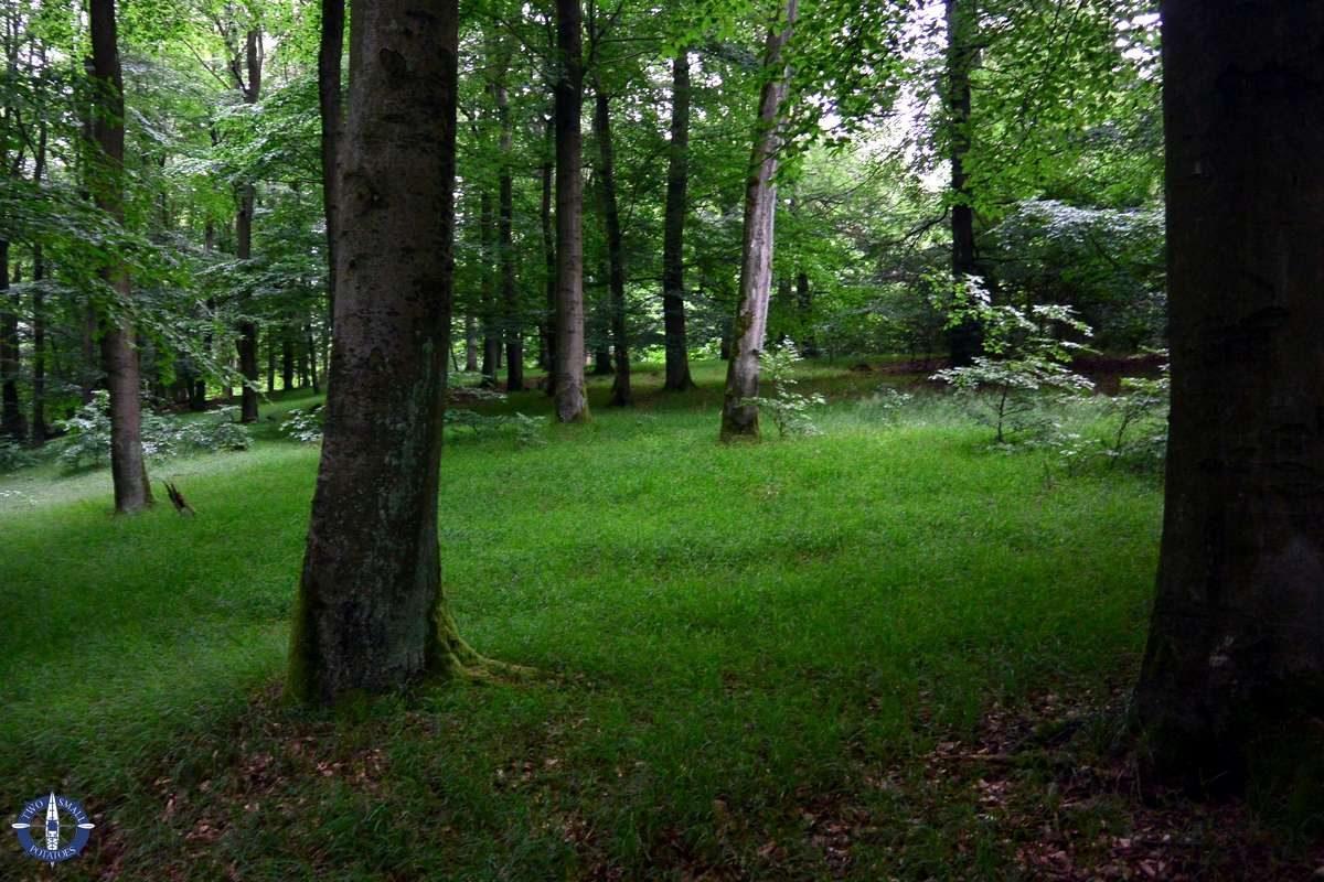 Pretty forests in Kellerwald-Edersee National Park, Germany