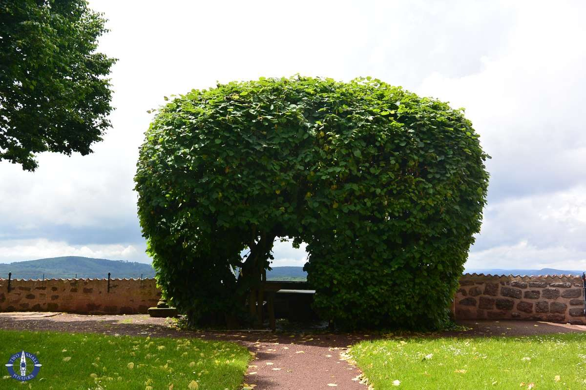 Shaped hedge with benches at Wartburg Castle, Germany