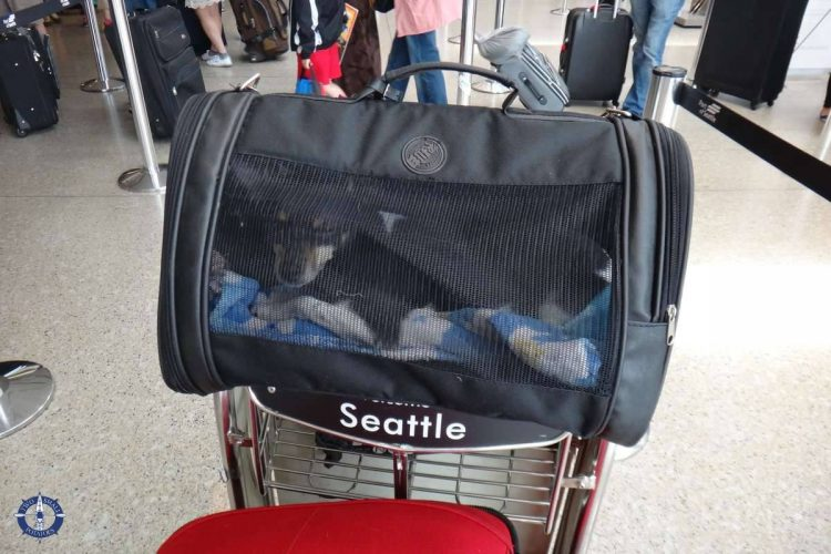 Dog at airport while moving overseas with pets