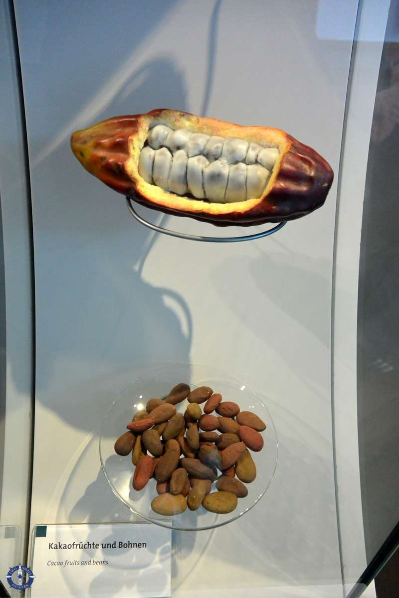 Cocoa pod at the Lindt Chocolate Museum in Cologne, Germany