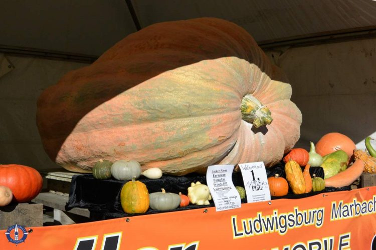 2016 winner of the Guinness Book of World Records heaviest pumpkin in the world, Germany