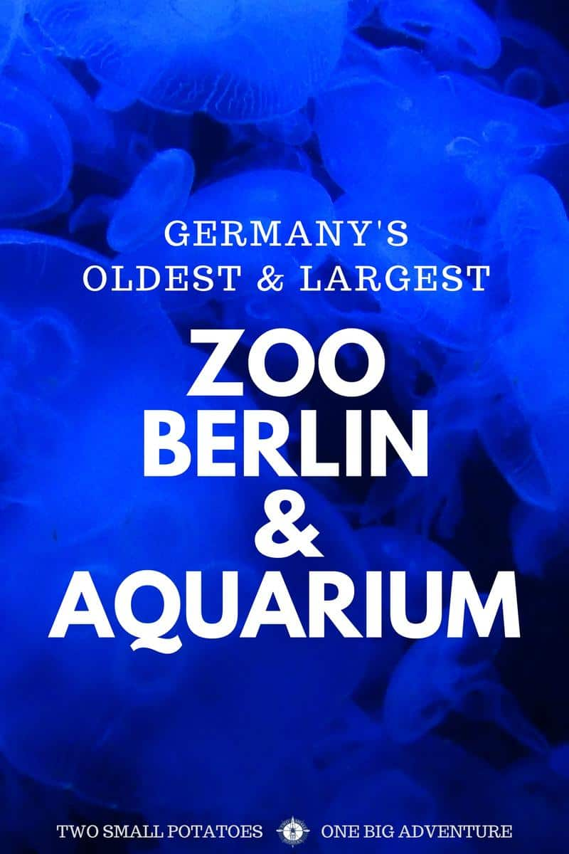 Animal fanatics - don't miss Zoo Berlin and Aquarium! If you flip a coin, chances are they likely have your favorite animal there.
