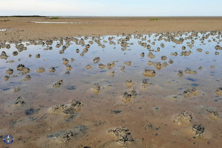 Lugworm mounds in the mudflats of Lower Saxony Wadden Sea National Park, Germany